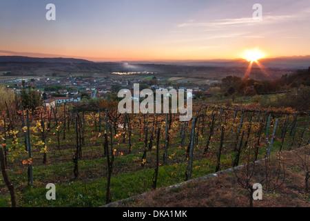 Sunset over Italian vineyard - Piedmont - Stockfoto