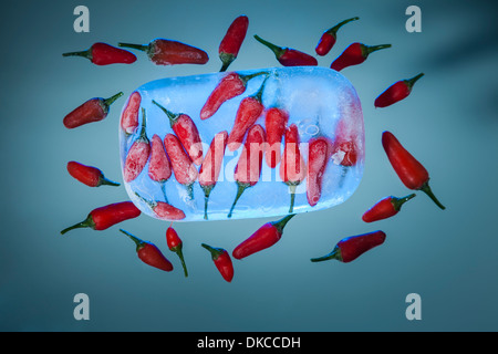 Red chili peppers frozen in a block of ice with some loose chillies surrounding it on a blue background - Stock Photo