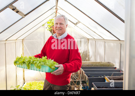 Senior man holding plants in greenhouse - Stock Photo
