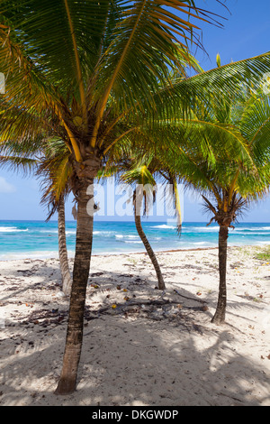 Long Bay, East Coast, Portland Parish, Jamaica, West Indies, Caribbean, Central America - Stock Photo