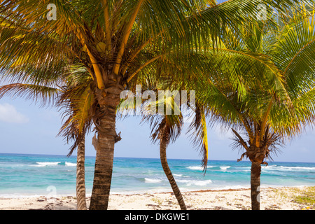 Long Bay, East Coast, Portland Parish, Jamaica, West Indies, Caribbean, Central America - Stock Photo