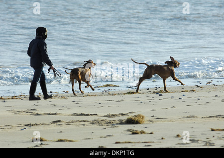 Dog walker and dogs playing on the beach, Winterton-On-Sea, Norfolk, England - Stock Photo