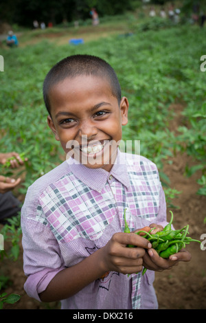 Boy harvesting chili peppers in Bihar State, India - Stock Photo