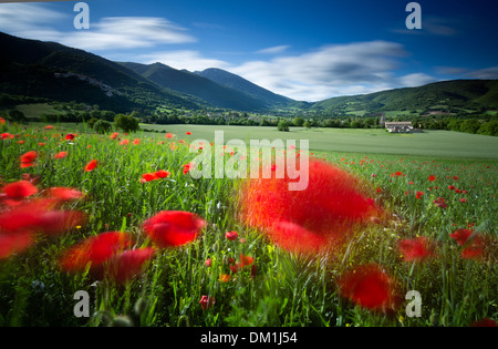 field nr Campi, Umbria, Italy - Stock Photo