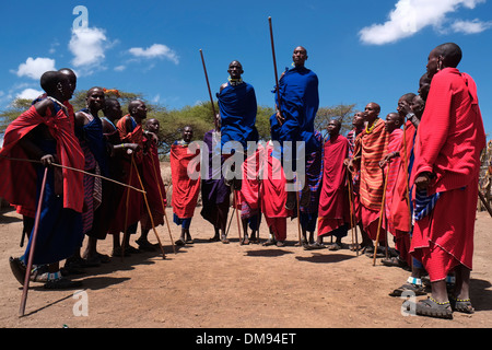 Maasai traditional jumping dance in the Ngorongoro Conservation Area in the Crater Highlands area of Tanzania Eastern - Stock Photo