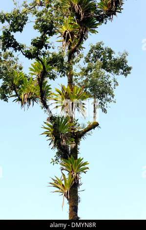 epiphytes and tropical trees relationship marketing