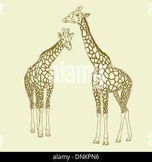 Two giraffes. Vector illustration. - Stock Photo
