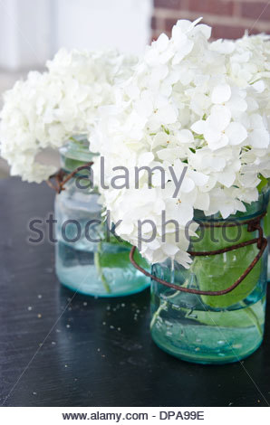 White hydrangea flowers arranged in glass mason jars outdoors on wooden table. - Stock Photo
