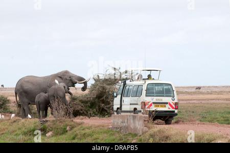 Somak white minibus close to elephant family browsing on bushes in Amboseli National Park Kenya East Africa - Stock Photo