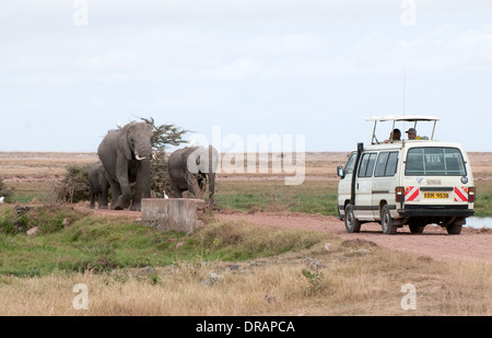 Elephant family walking down road towards white Somak minibus in Amboseli National Park Kenya East Africa - Stock Photo