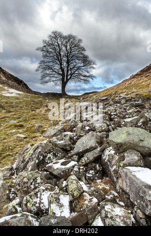 Sycamore Gap, Northumberland, England - Stock Photo