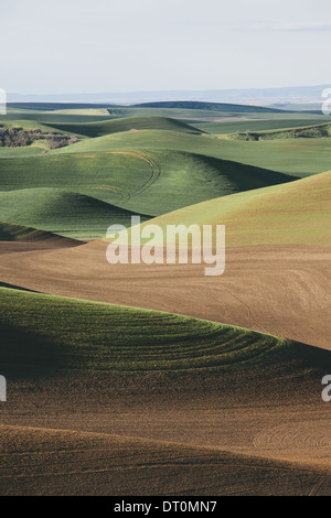 Washington USA view over green rolling hills and farmed fields - Stock Photo