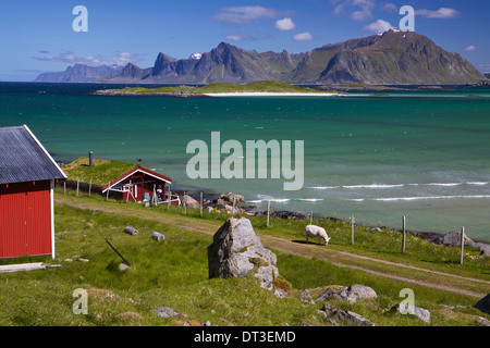 Animal farm with sod roof on Lofoten islands in Norway - Stockfoto