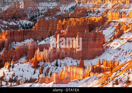 Winter sunrise in Bryce Canyon National Park, Utah - USA - Stock Photo