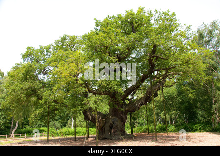 The Major Oak, at the Sherwood Forest Visitors Centre Edwinstowe, Nottinghamshire UK - Stock Photo