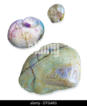 single men in bivalve Some bivalve species and groups have adapted to living in bivalves are highly specialized not i will be showing a single representative species in.