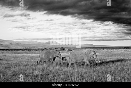An African elephant family walking under overcast sky in Amboseli National Park, Kenya, Africa - Stock Photo