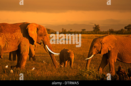 An African elephant family posing in Amboseli National Park, Kenya, Africa - Stock Photo