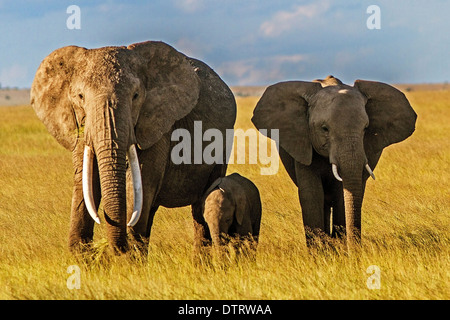 An African elephant family posing in Amboseli National Park, Kenya, Africa - Stockfoto