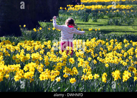 London, UK. 9th March 2014. People enjoying the warm weather and spring daffodils in St James Park, London, England. - Stock Photo
