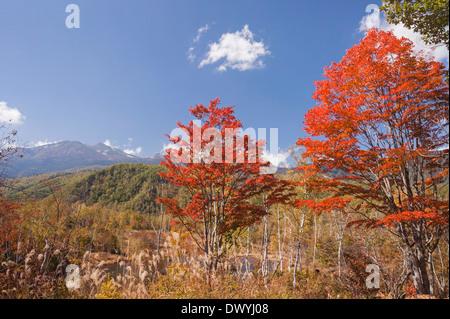 Autumn leaves, Nagano Prefecture, Japan Stock Photo ...