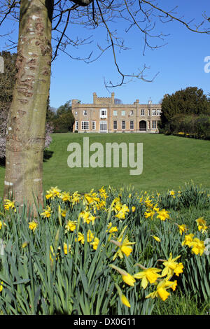 Nonsuch Park, Surrey, England, UK. 16th March 2014. Daffodils are in bloom in the gardens of Nonsuch House, with - Stock Photo