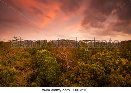 Dawn in Soberania national park, Republic of Panama. - Stock Photo