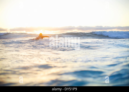Female surfer swimming out to waves on surfboard, Sydney, Australia - Stock Photo