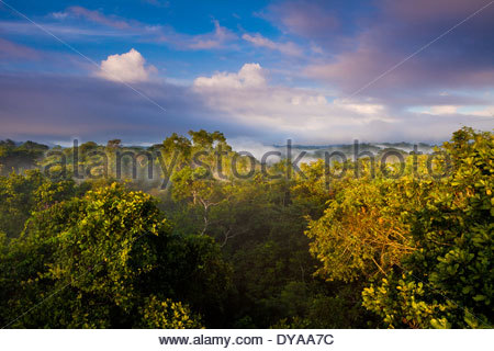 Early morning in Soberania national park, Republic of Panama. - Stock Photo
