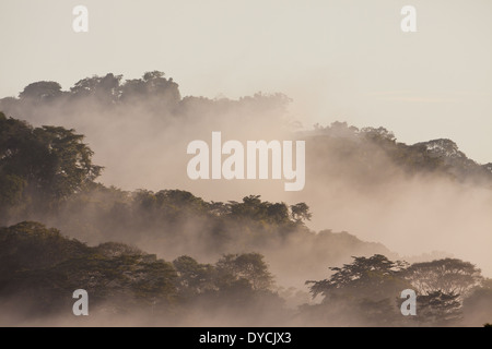 Misty rain forest at dawn in Soberania National Park, Republic of Panama. - Stockfoto