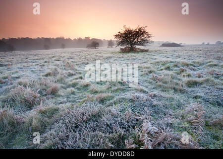 Sunrise over Brettenham Heath on a cold frosty morning on the edge of Thetford Forest. - Stock Photo