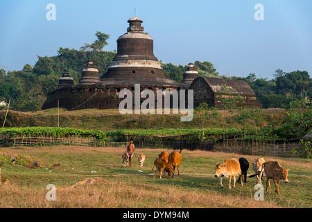 Young herdsman with cattle in front of Htukkanthein, Dukkanthein or Htoekanthein Temple, Mrauk U, Sittwe Division, - Stock Photo