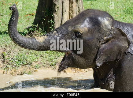 Close-up of a baby elephant bathing in a lake in the Masai Mara - Stock Photo