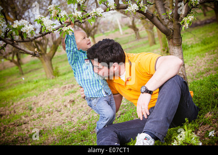 Father and son fooling about under a cherry tree, Austria - Stock Photo