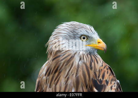 the hawk in the rain pdf