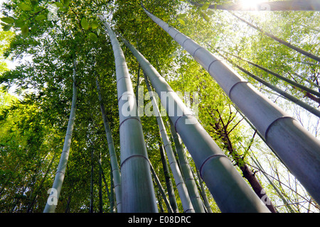 In a sunny bamboo forest - Stockfoto