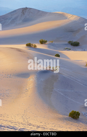View of Mesquite Flat Sand Dunes in the evening, Death Valley National Park, California, USA, America - Stockfoto
