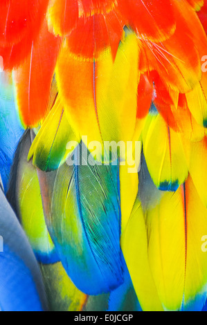 colorful feathers of a tropical parrot - Stock Photo