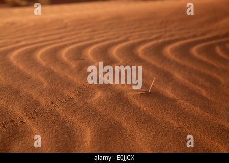 animal tracks south africa pdf