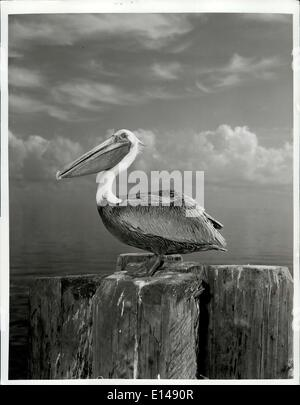 Apr. 17, 2012 - To those who say birds are the most elegant and beautiful of nature's menagerie, Florida's pelican - Stock Photo