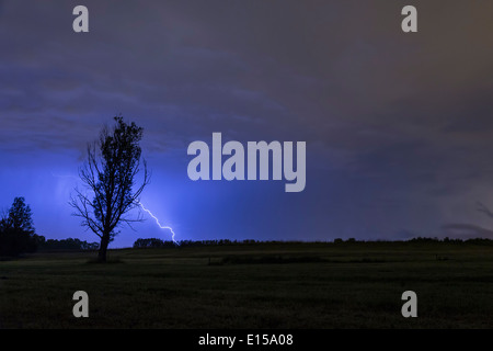 Lightning strikes behind a tree silhouette on a field - Stock Photo