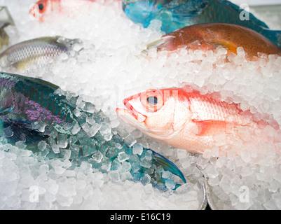 Fresh fish on sale in the Kosetsu Ichiba Market, off Kokusai Street, Naha City, Okinawa, Japan - Stock Photo