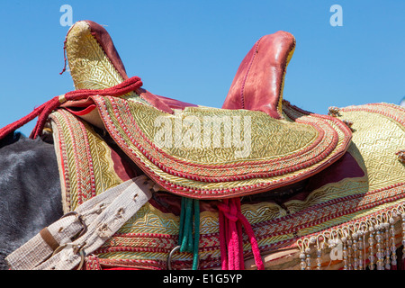 Detail of traditionally decorated Arabian Barb horses performing at a fantasia near Rabat in Morocco. - Stock Photo