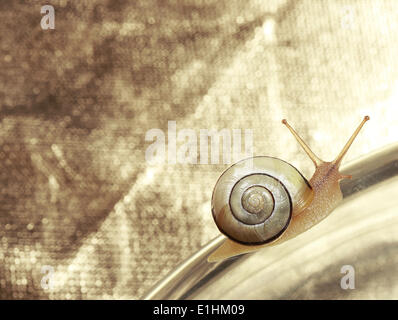 Common Garden Banded Snail Crawling on Metallic Background - Stock Photo