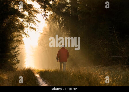 Hiker walks over a forest road in the mist. - Stock Photo