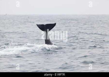 Orca tail - Stock Photo