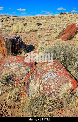 Petrified Forest National Park, Arizona, USA - Stock Photo