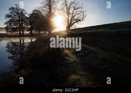 misty morning,early walk, richmond park, sunrise, - Stock Photo