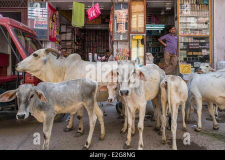 India Rajasthan State Jodhpur the old city - Stock Photo