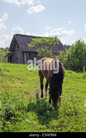 Classical haymaking in the Belarus village. Horse for hay transport on a cart. - Stock Photo